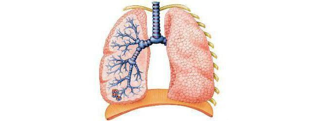 alcaloză respiratorie