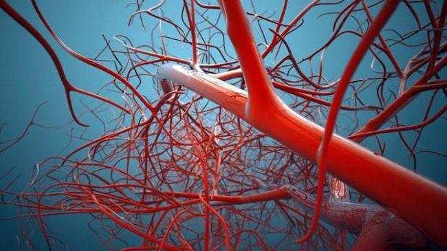 ce țesuturi sunt lipsite de vase de sânge