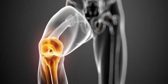 genunchi genunchi anatomie