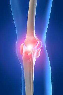 anatomia topografică a genunchiului