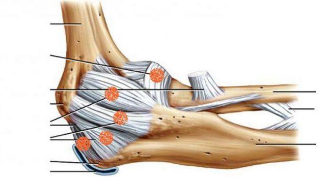anatomia articulației cotului a scurgerii limfatice