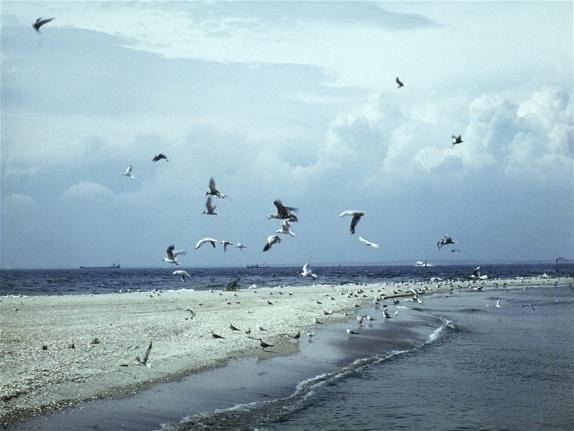 probleme ecologice ale Mării Azovului
