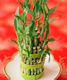 bambus acasă