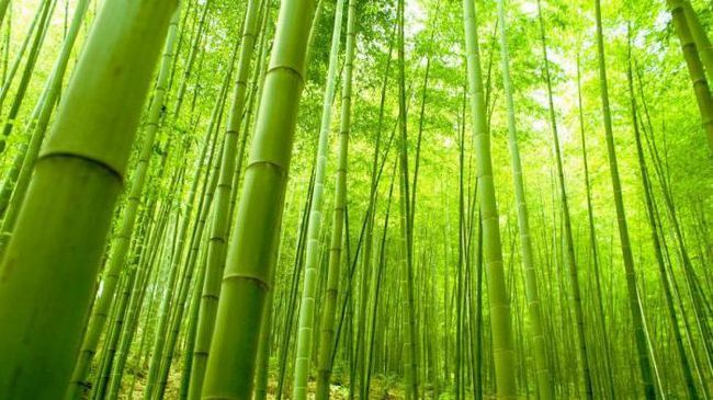 Bamboo fiber ce este?