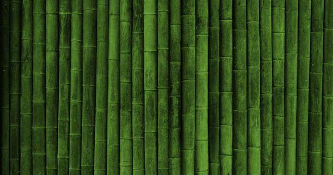 preturi de bambus panza