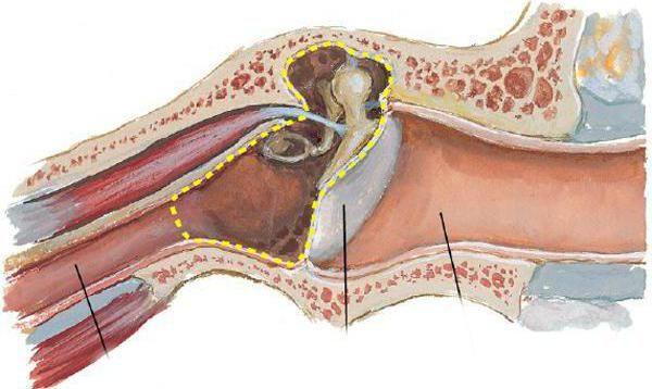 pereții membranei timpanice