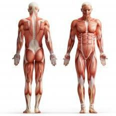 Trecerea Bibliei: anatomia exercițiilor de forță