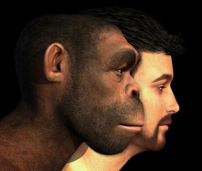 evoluția biologică a omului