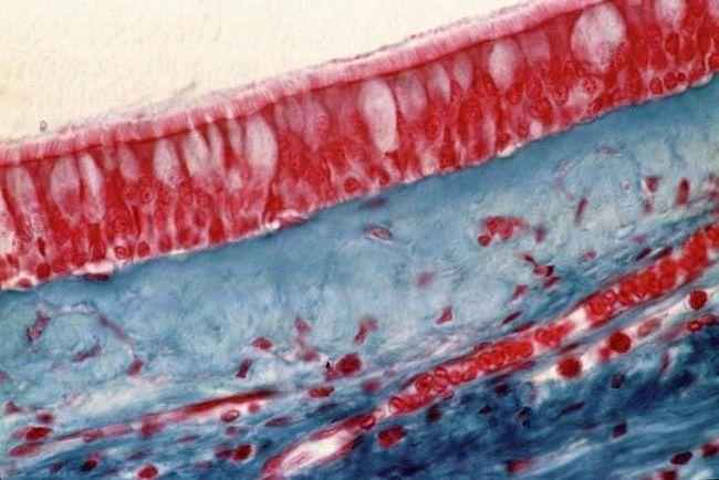 ce reprezintă biologia țesuturilor