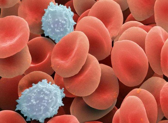 decât a format biologia țesutului epitelial