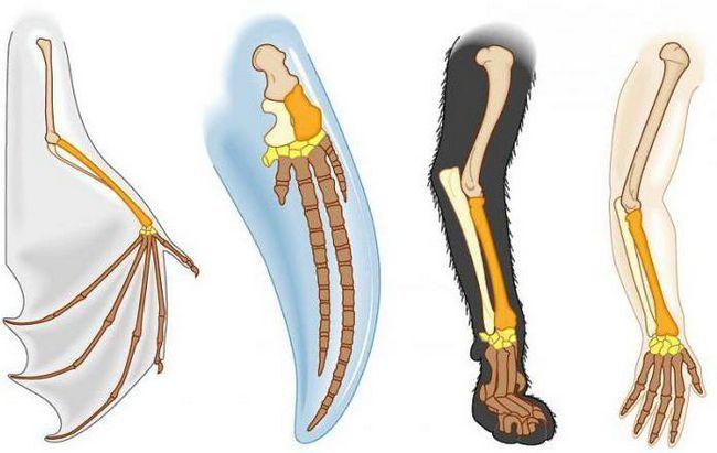 части руки человека