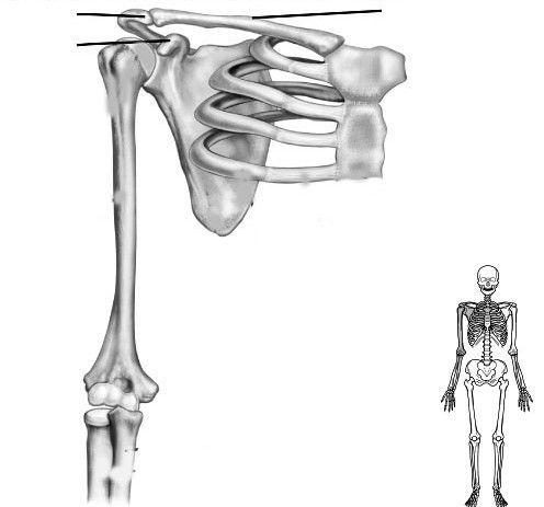нижняя часть руки