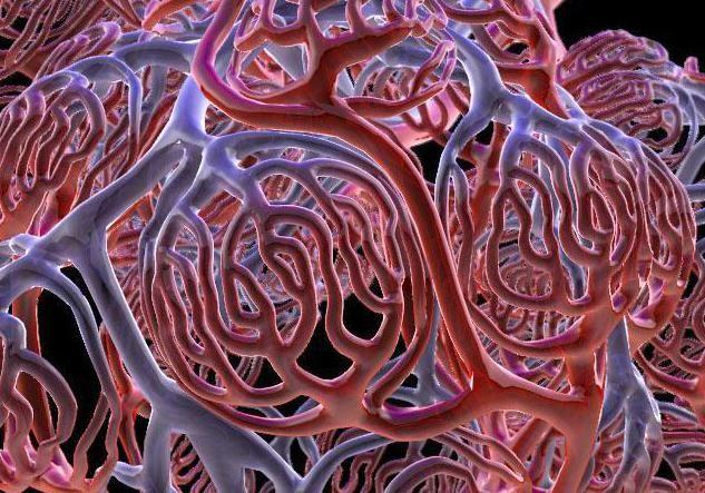 decât arterele venelor și capilarelor diferă