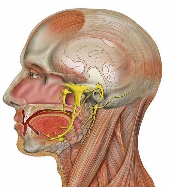 tratamentul nervului trigeminal facial la domiciliu