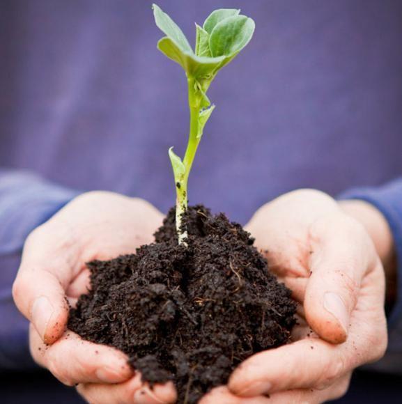 Determinarea substanțelor organice