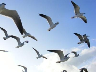 migrarea pendulului