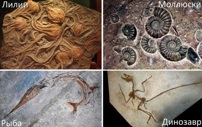 scara timpului geologic al fanerozoicului
