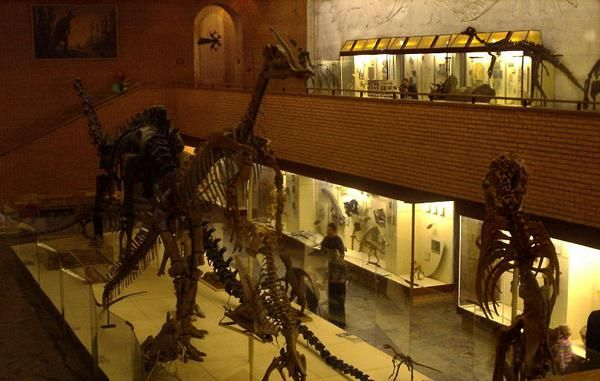 Dinosaur Muzeu Foto