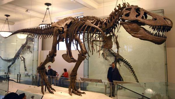 schelete ale muzeului dinozaurilor