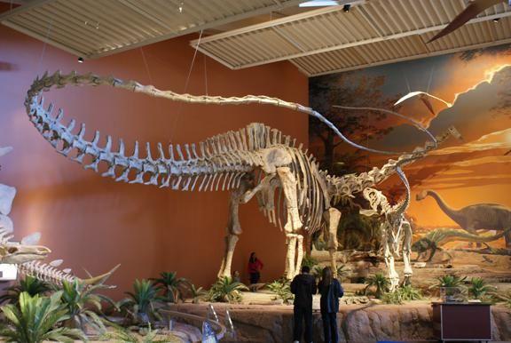 dinozaur muzeu tabără caldă
