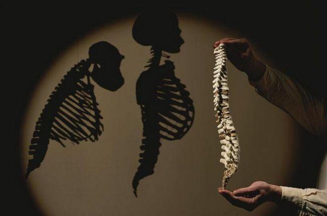 noua teorie a originii umane