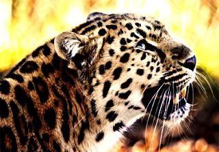 alte animale puternice și frumoase