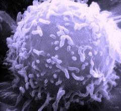 creșterea numărului de limfocite în sânge