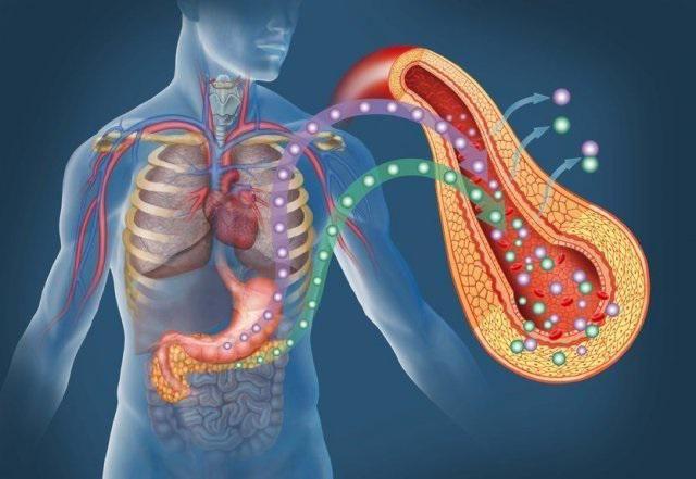 O enzimă care descompune grăsimile se numește