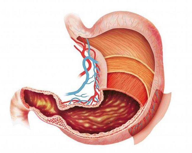 enzime care descompun grăsimile în corpul uman