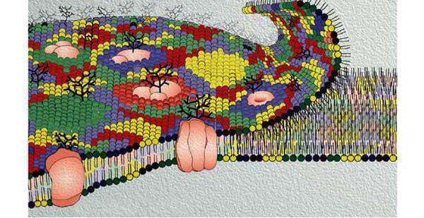structura și funcția membranei celulare
