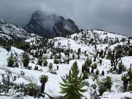 Unde pot găsi zăpada în Africa - pe cel mai tare continent?