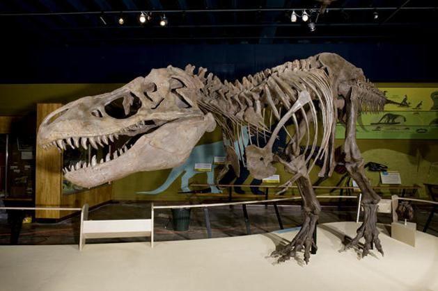 muzeul dinozaurilor