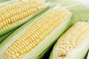 Unde se eliberează și cum se completează cardul `Corn`