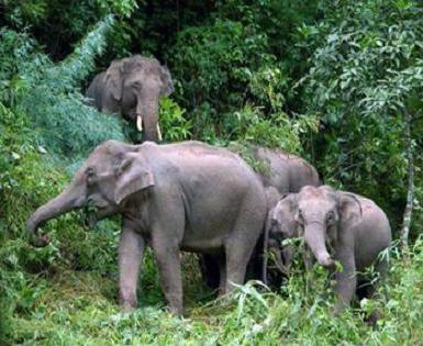 Unde trăiește un elefant, puteți afla prin numele său