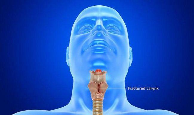 laringelui cartilajului laringelui