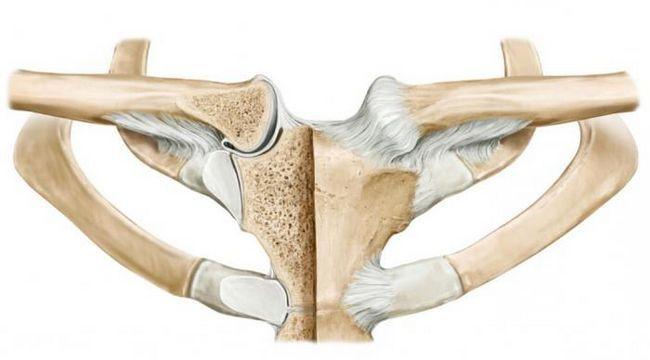articulația sternoclaviculară în structură
