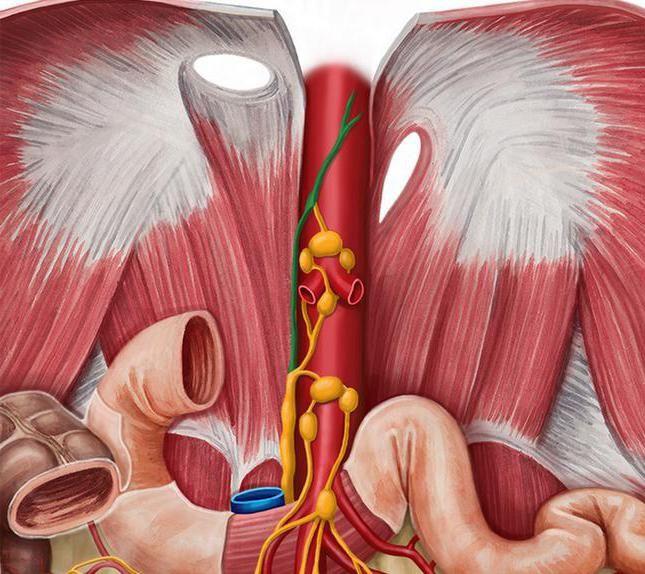 anatomia ductului toracic