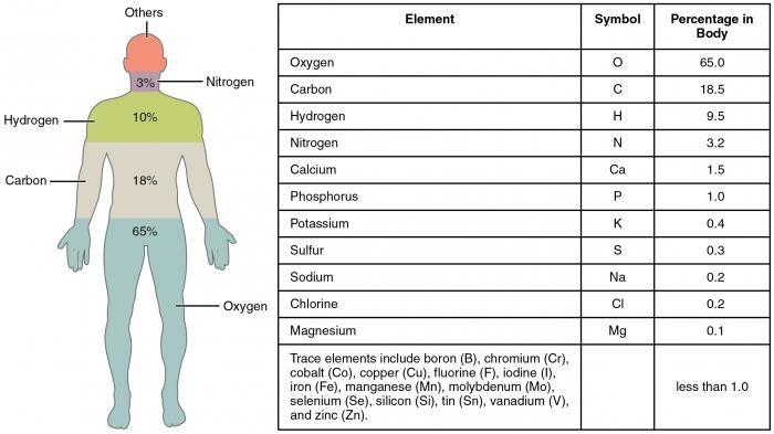 Care este compoziția chimică a oaselor