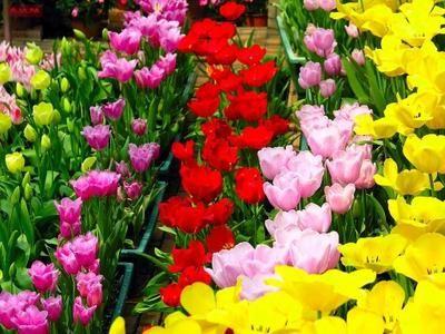Vreți să știți de ce flori de diferite culori?