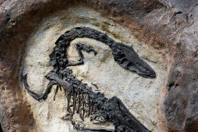 apariția dinozaurilor