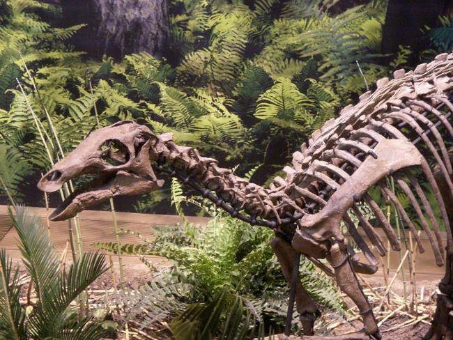 istoria mondială a dinozaurilor