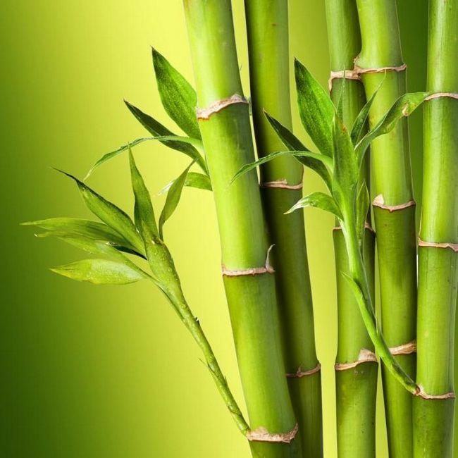 bambus pături recenzii