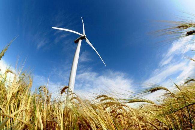 obiectivele și obiectivele ecologiei
