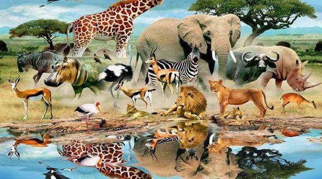 ecologia animalelor