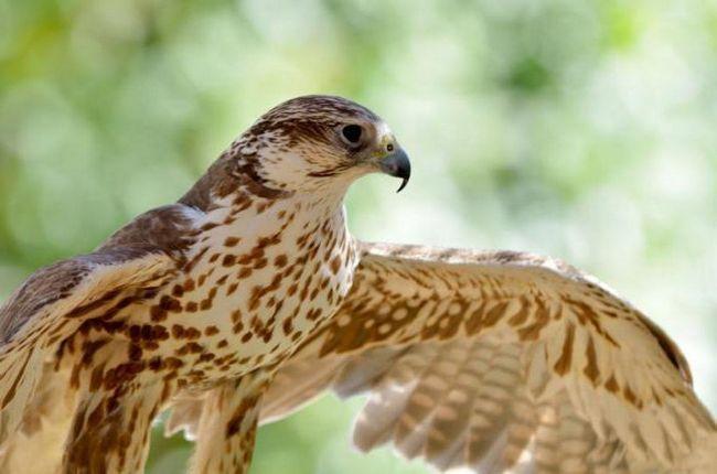 ecologia protecției animalelor
