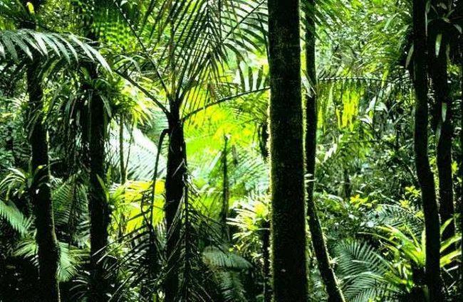 Pădurile Ecuatoriale - plămânii planetei noastre