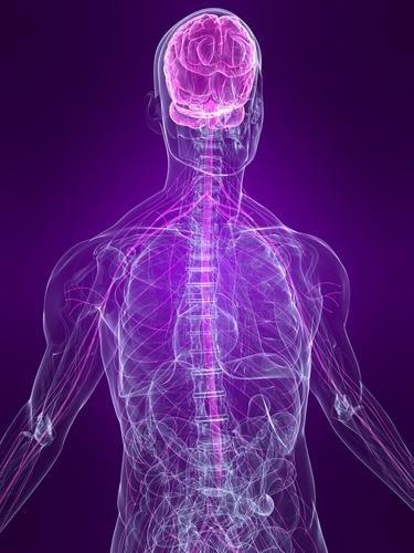Simptomele infecției cu encefalită