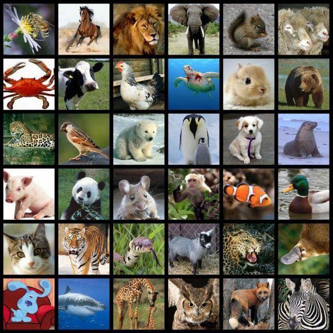 forțele motrice ale evoluției includ diversitatea speciilor