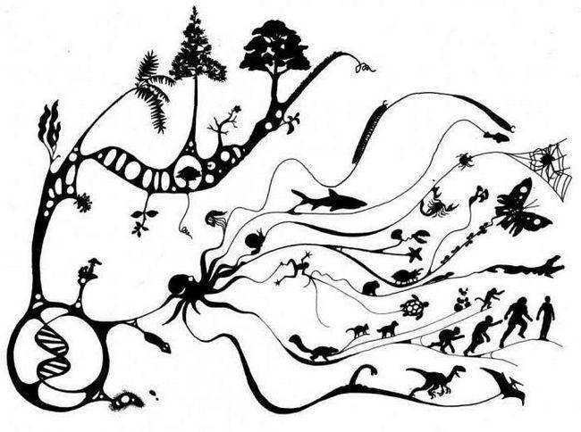 Pentru forța motrice a evoluției, biologii se referă