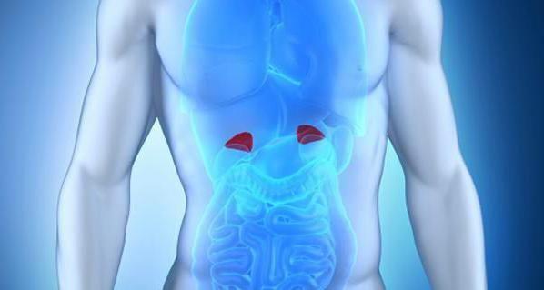 Ce sunt glandele endocrine?